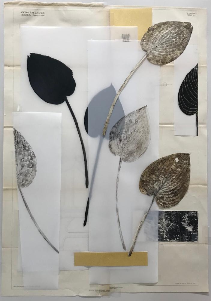 Botanical Folio 6 by Michele Woodey